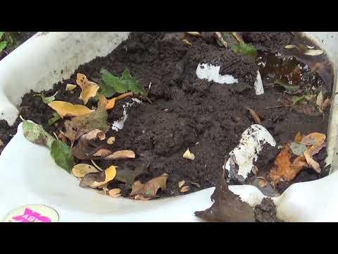 curățarea corpului de paraziți fungici