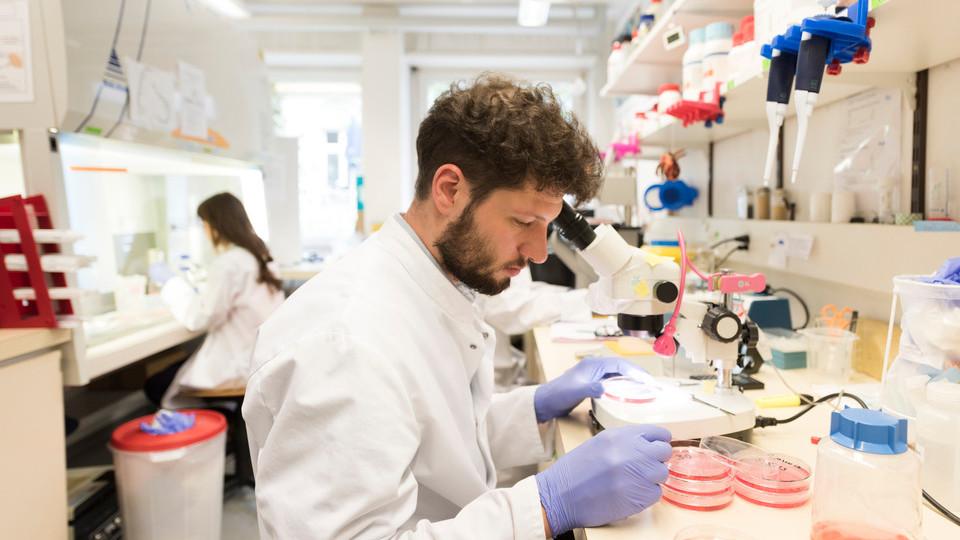 Anthelmintic drug development, Anthelmintic drug development