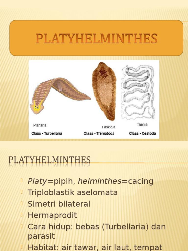 ncrengtura NEMATHELMINTHES - [DOC Document], Platyhelminthes nemathelminthes ppt