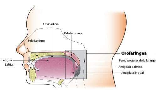 papiloma cancer de garganta)