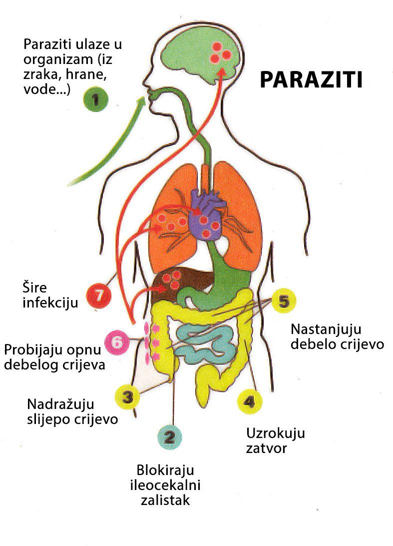 ce medicamente scutesc paraziții