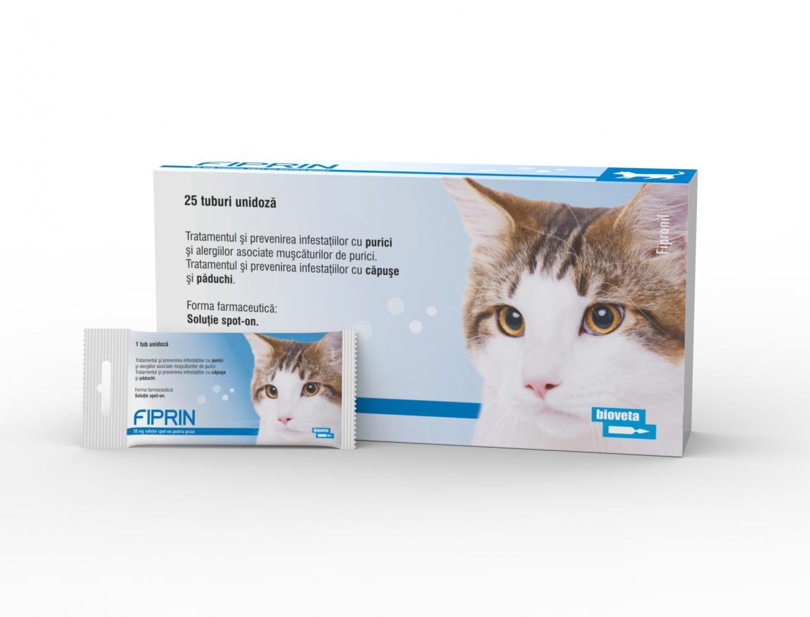 papiloame într un tratament pentru pisici