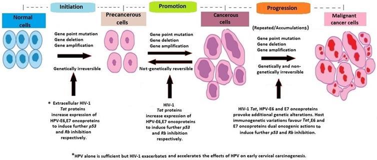 Hpv cancer cells cervix, Traducere