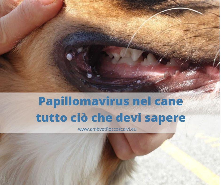 papilloma nei cani)
