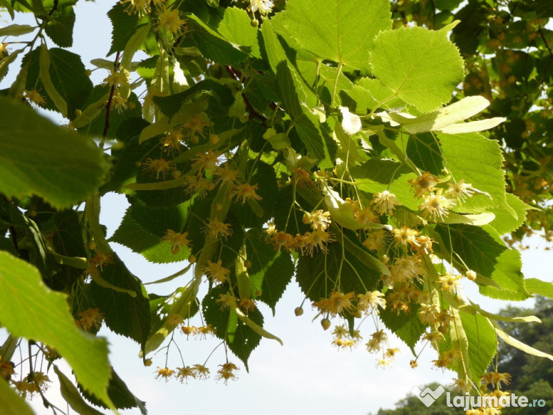 controlul spotului cu frunze helminthosporium