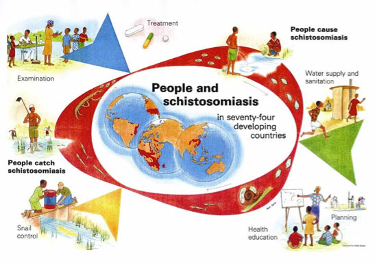 BMC Infectious Diseases | Articles, Schistosomiasis control, Schistosomiasis control