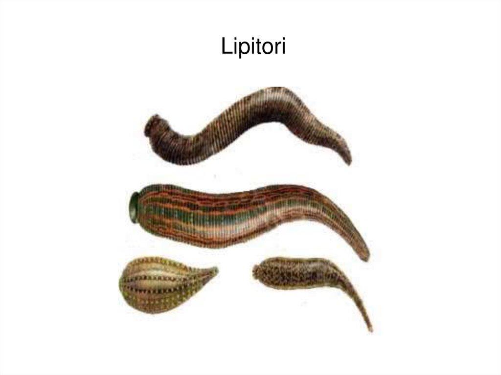 vierme de masă a pielii