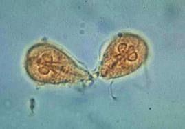 human papillomavirus oncogenes medicament pentru copii pentru paraziți
