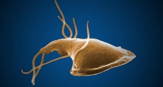 Enterobius vermicularis bei kindern - Papiloma escamoso benigno esofago
