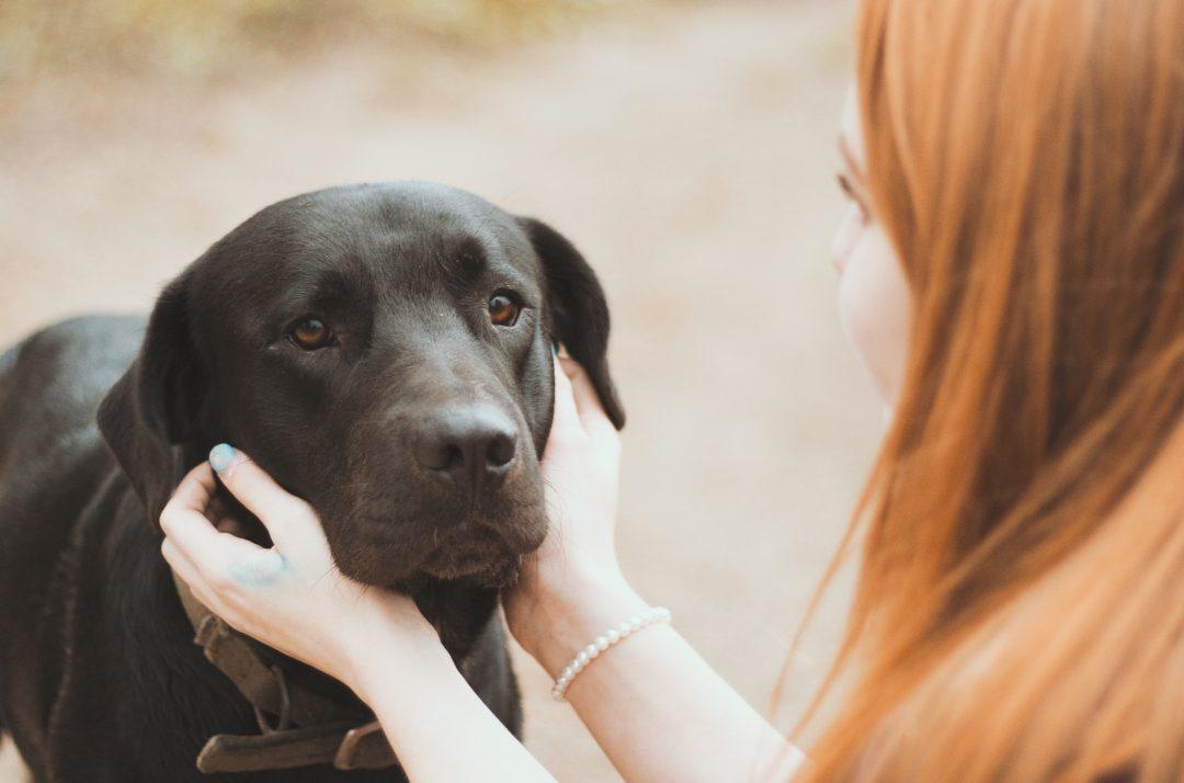 Deparazitarea la câini. Când, cum și cu ce se face deparazitarea externă și cea internă