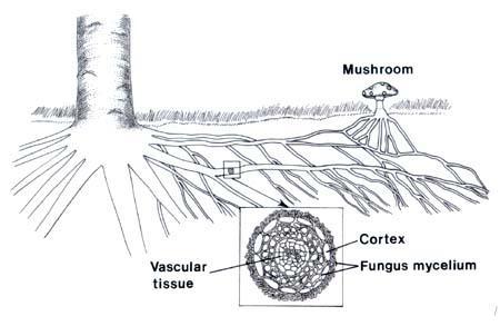 Infecție cu papilomavirus și condiloame în timpul sarcinii