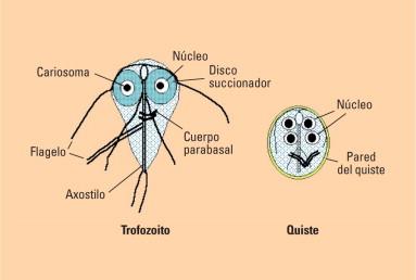 patogeneza giardiei)