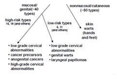 human papillomavirus disease galina de tenă