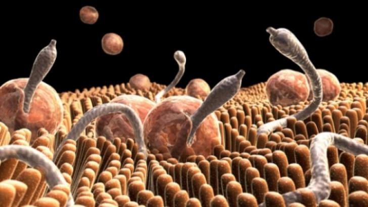 Parazitol pt. Viermi Intestinali – pret, pareri, prospect, forum, farmacii