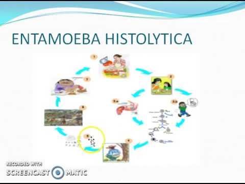 ciclo biologico del parasito oxiuros)