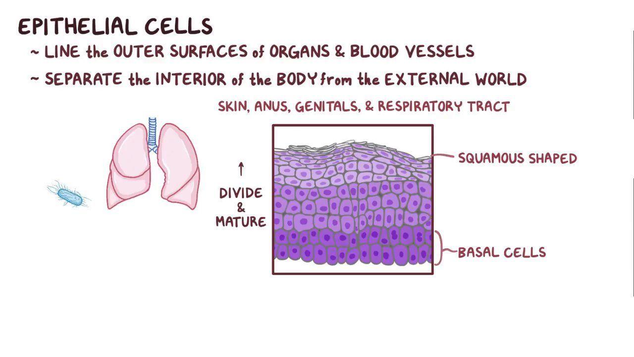 Sintomi di papilloma virus nelluomo
