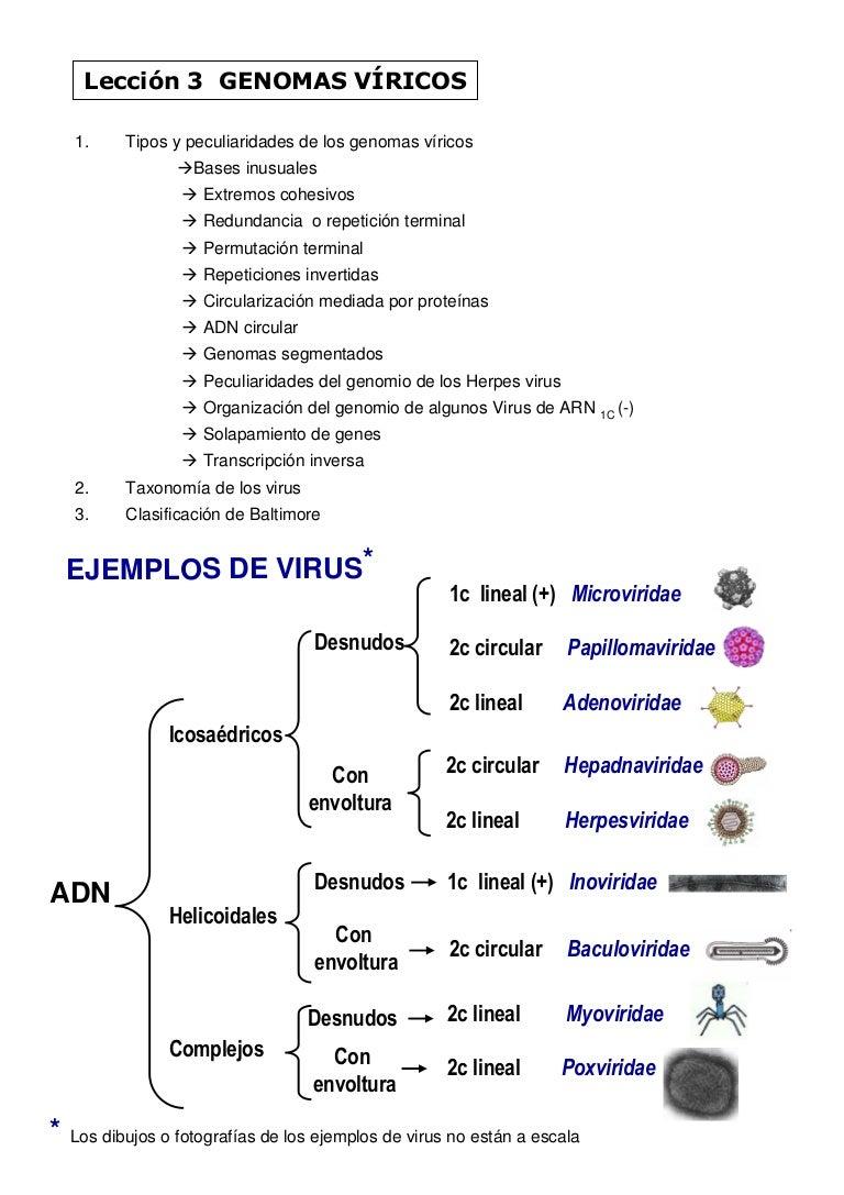 papillomaviridae clasificacion)