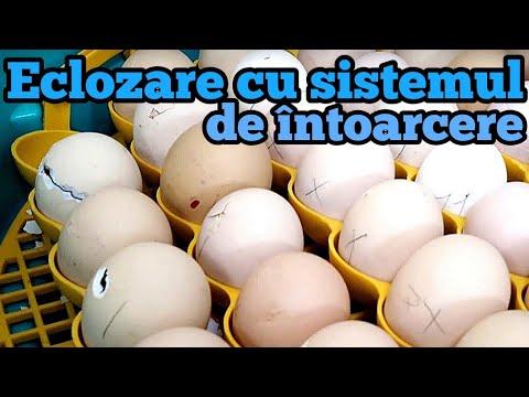 vierme de ou și enterobioză)