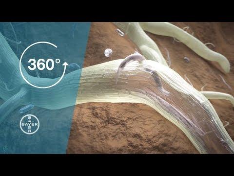Helmintox pieredze, După tratamentul helmintelor