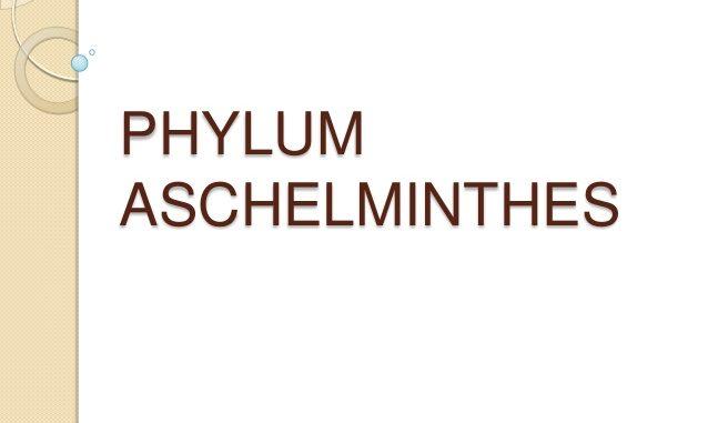 phylum aschelminthes reproduction