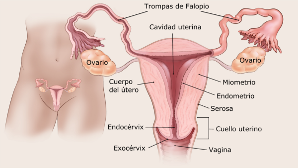 cancer endometrial tipos