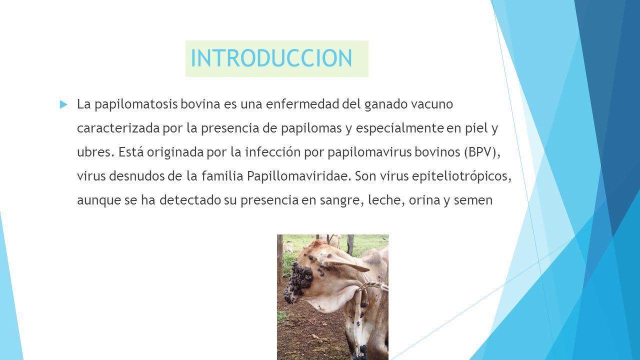 papilomatosis bovina etiologia)