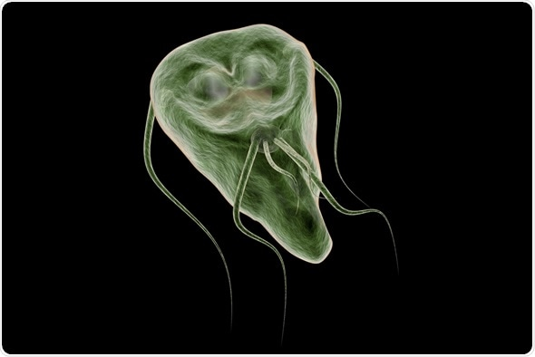 Malarie - Wikipedia, Incidența giardia uk