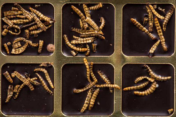 paraziti in tot corpul
