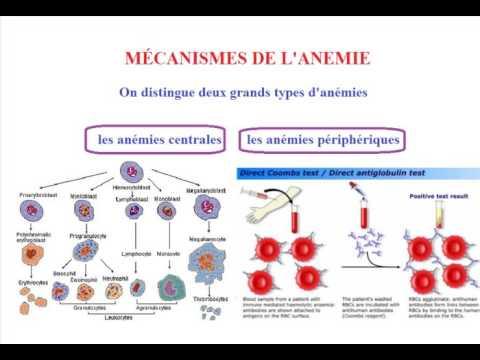 types des anemies)
