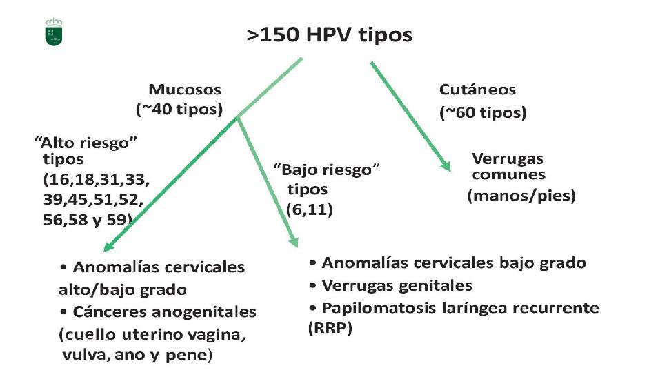 virus papiloma tipos