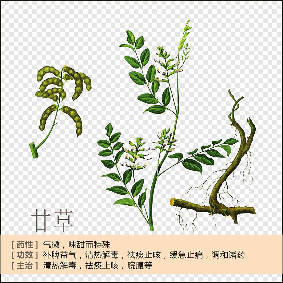 paraziți de rădăcină de rubarb)