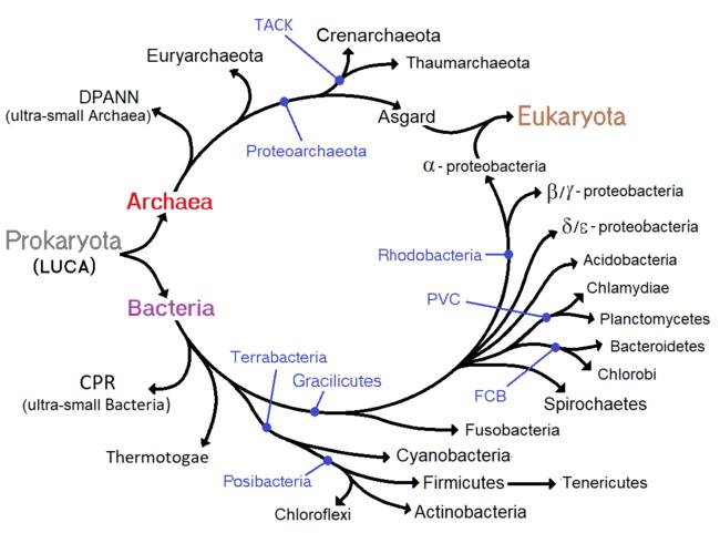 paraziți și agenți patogeni prădători