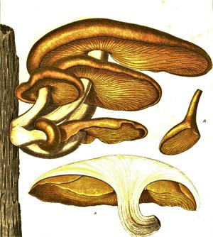 Nivelul țesutului de platyhelminthes Regnul Animalia