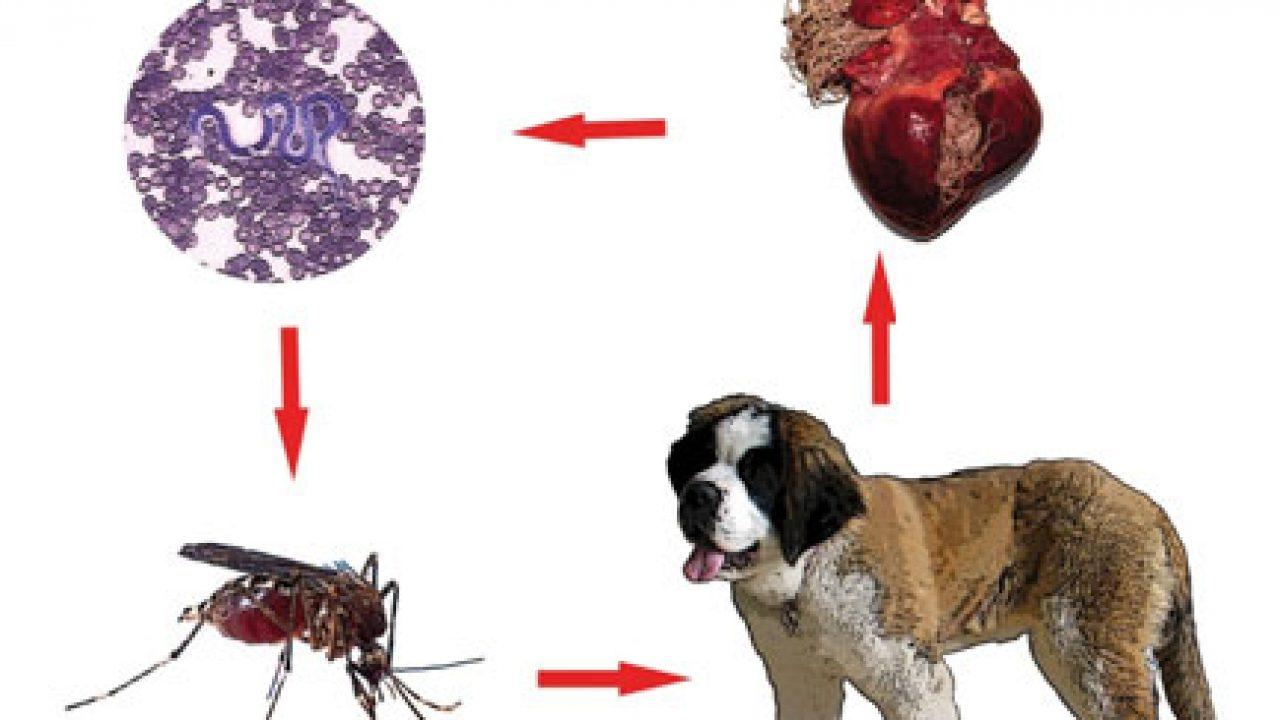colonul curăță paraziții de viermi