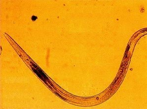 Giardinon Sirop, ml (Paraziti intestinali) - anvelope-janteauto.ro