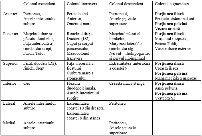 teniile intestinului gros)