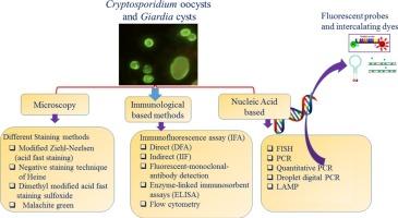 giardia cryptosporidium