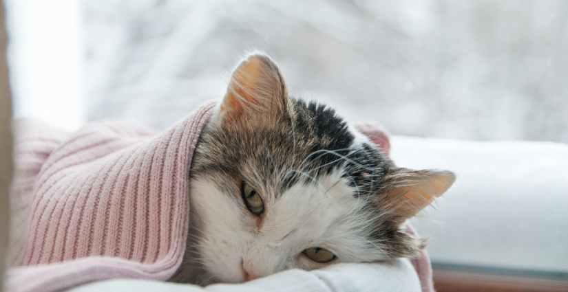 giardien bei katzen naturlich behandeln)