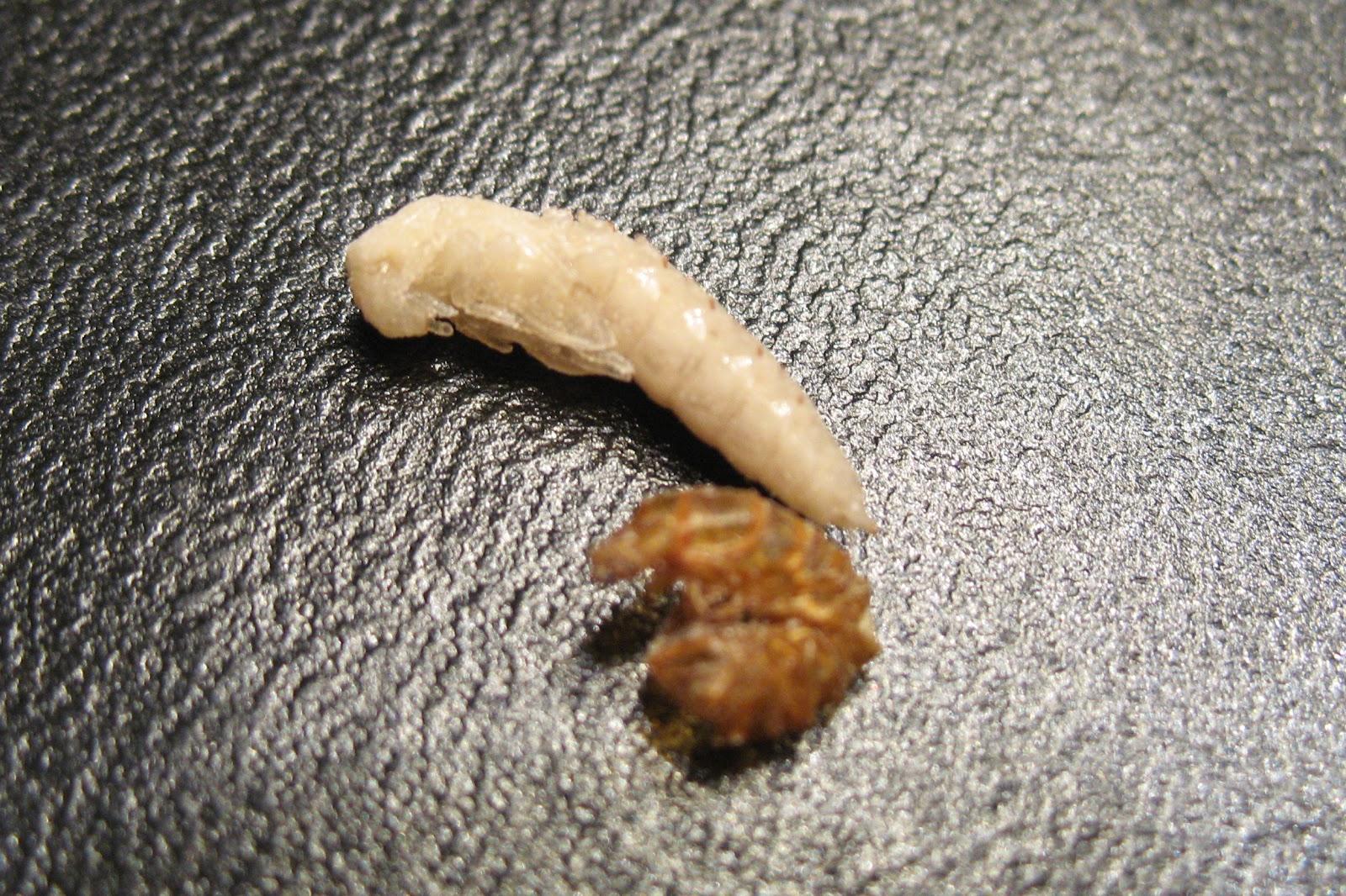 informatica pentru viermi cancer cavitate bucala