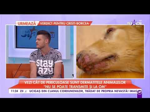 tratamentul viermilor și helmintelor)