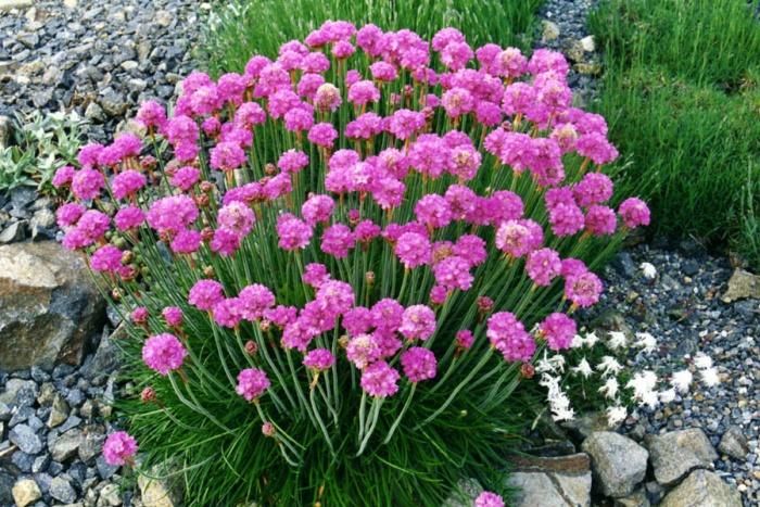 flori de tenă