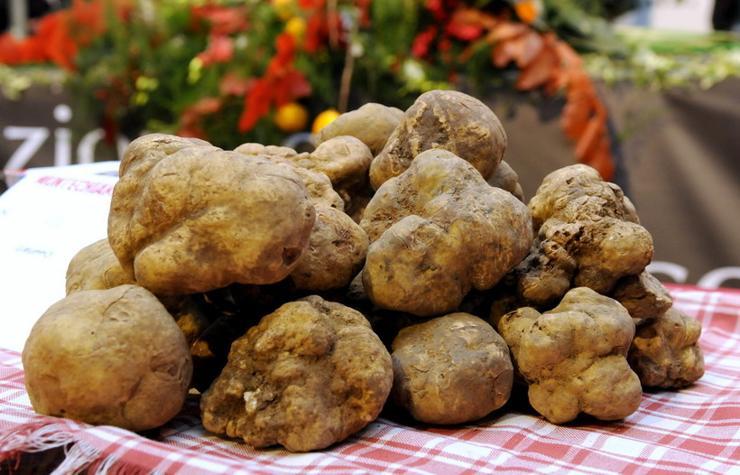 ciuperci scumpe)
