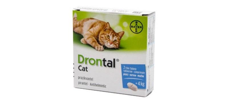 tenie la pisici tratament