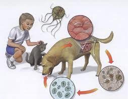 viermi în timpul unui tratament pediatric