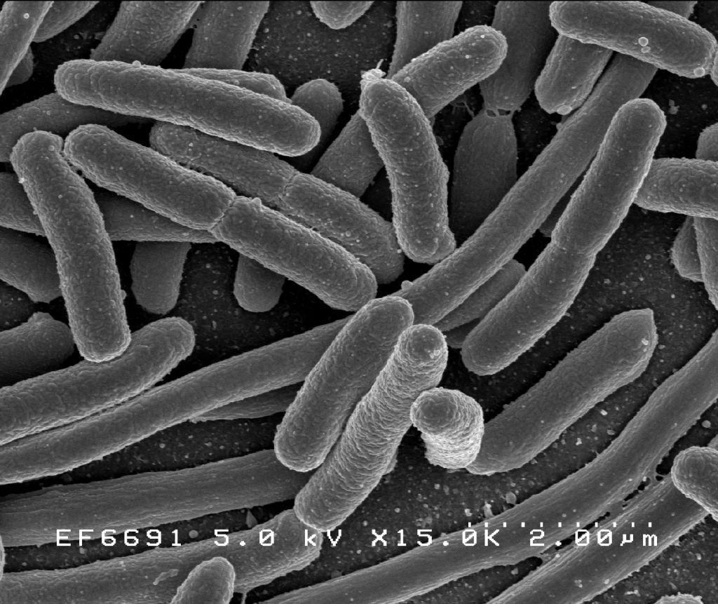bacteriile se hrănesc cu paraziți