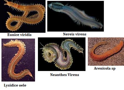 pengertiai filum aschelminthes