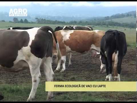 teniera vitelor trăiește la oameni)