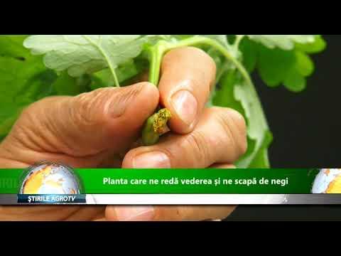 Diareea la viței: 12 tratamente recomandate de fermieri
