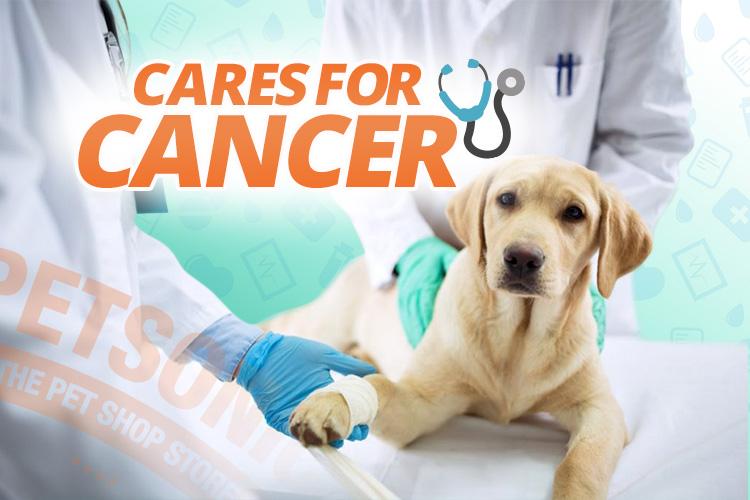 cancer abdominal en perros)