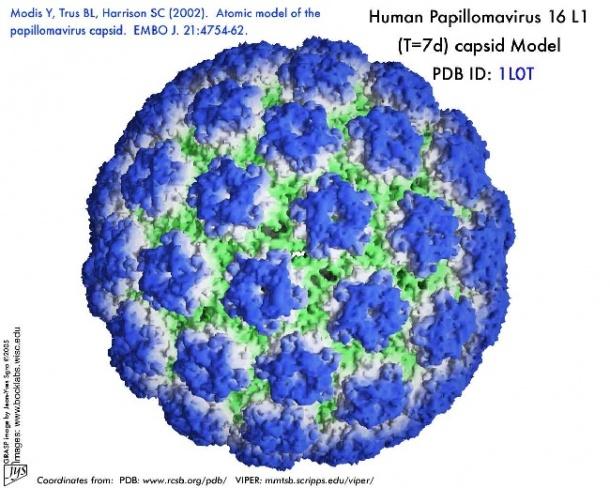 virus papilomavirus uman cancerigen